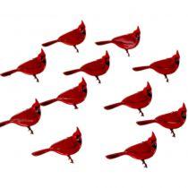 12 brads Cardinal