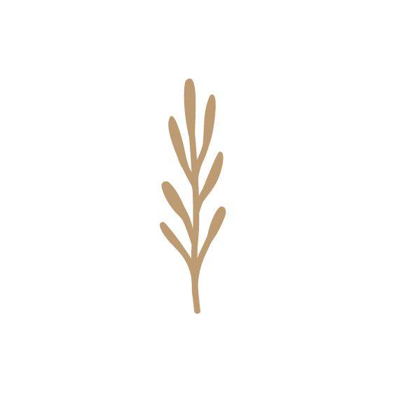 EMBELLISSEMENT BOIS PLANTE GRASSE 1
