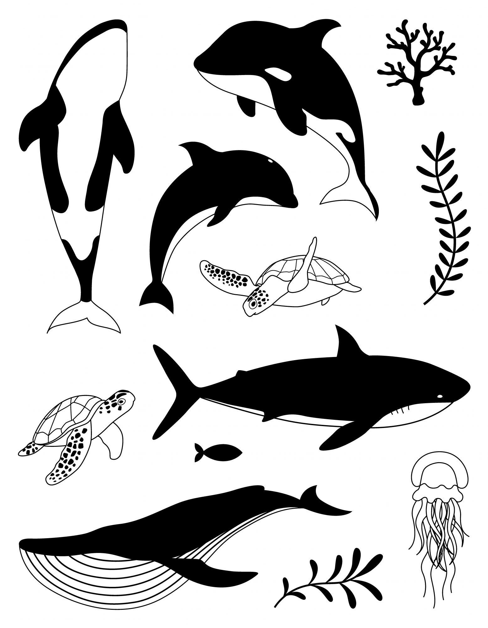 SET DE TAMPONS TRANSPARENTS - Baleines