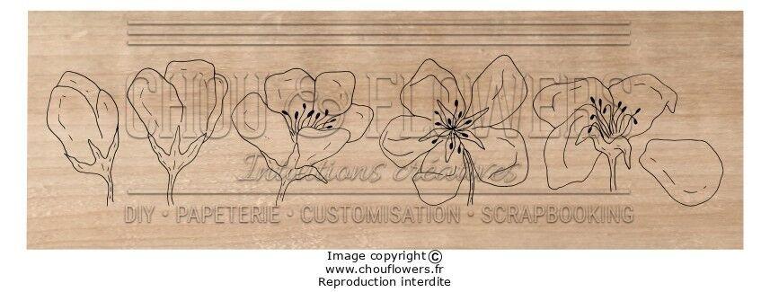 TAMPON BOIS - Fleur de Pommier