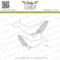 TAMPONS TRANSPARENTS BALEINES - Set Whales